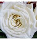 Ramo de novia preservado con rosas rojas y champán