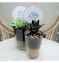 Planta crasa en vaso regalo para invitados